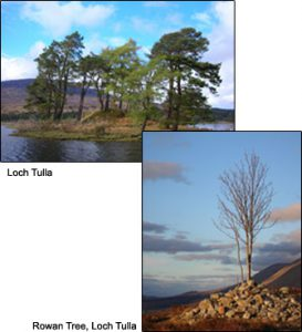 """Loch Tulla and Rowan Tree"