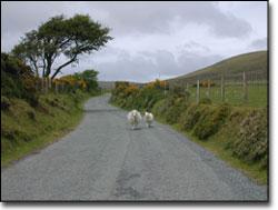 On the road to Cym Gawr