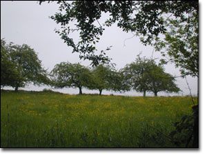 Tor Field in Glastonbury, England